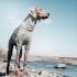 Oblečení pro psy Hurtta Body Warmer 80M šedý
