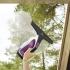Čistič oken Electrolux WELLS7 WS71-4VV fialový
