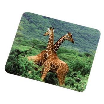 Hama Žirafa